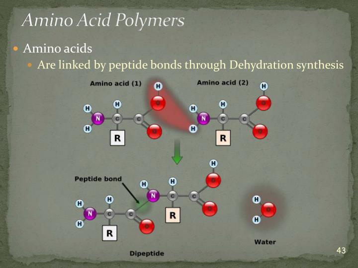 Amino Acid Polymers