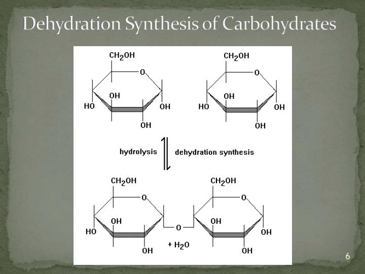 Dehydration Synthesis of Carbohydrates