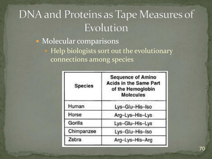 DNA and Proteins as Tape Measures of Evolution