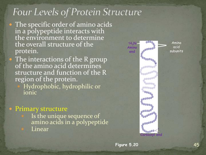 Amino acid subunits