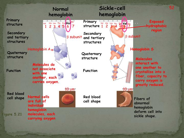 Sickle-cell hemoglobin