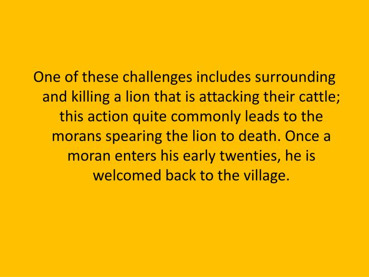One of these challenges includes surrounding and killing a lion that is attacking their cattle; this action quite commonly leads to the morans spearing the lion to death. Once a moran enters his early twenties, he is welcomed back to the village.