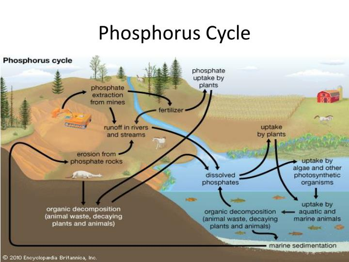 PPT - Abiotic Cycles PowerPoint Presentation - ID:2170024 Nitrogen Fixation Cycle