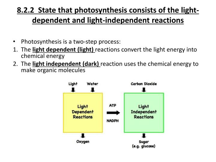 8.2.2  State that photosynthesis consists of the light-dependent and light-independent reactions