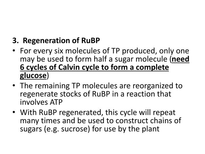 3. Regeneration of