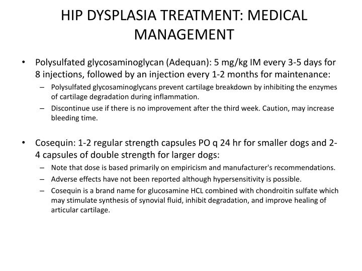 Hip Dysplasia Treatment Dogs Natural