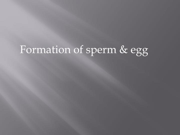 Formation of sperm & egg