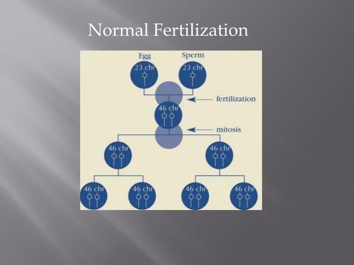 Normal Fertilization