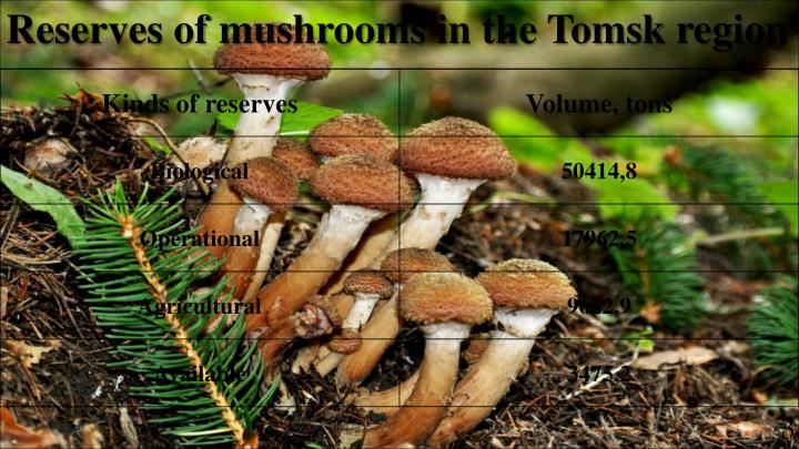 Reserves of mushrooms in the Tomsk region
