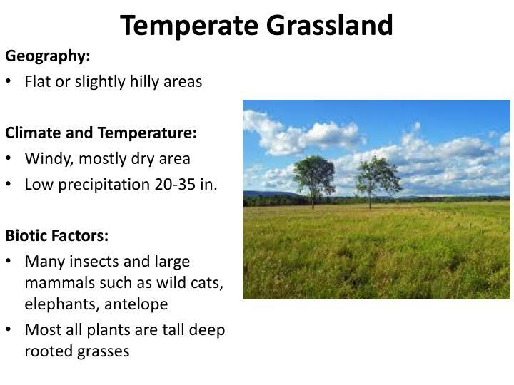Temperate Grassland