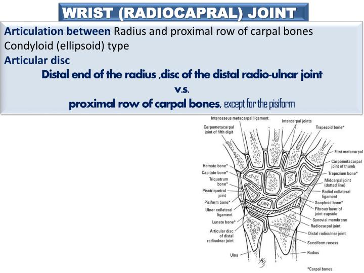 WRIST (RADIOCAPRAL) JOINT