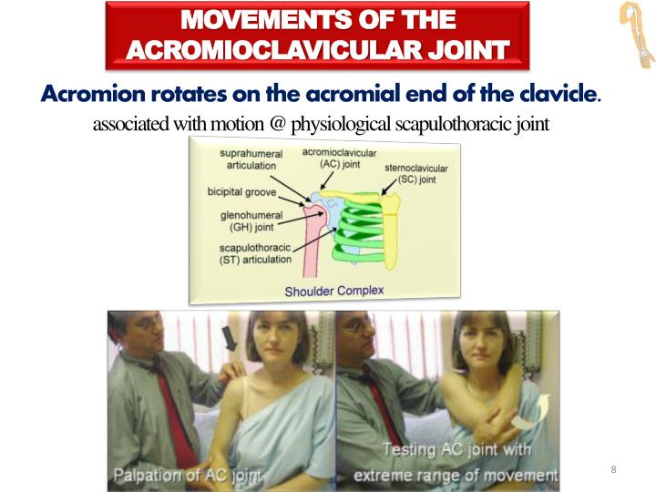 MOVEMENTS OF THE ACROMIOCLAVICULAR