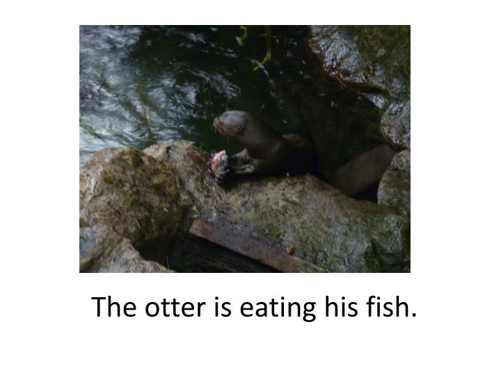 The otter is eating his fish.