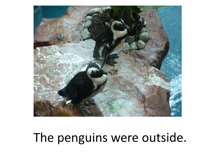 The penguins were outside.