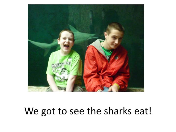 We got to see the sharks eat!