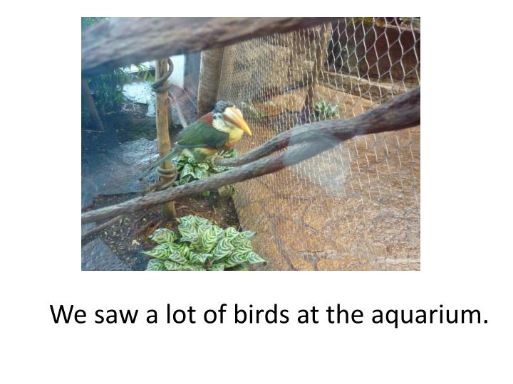 We saw a lot of birds at the aquarium.