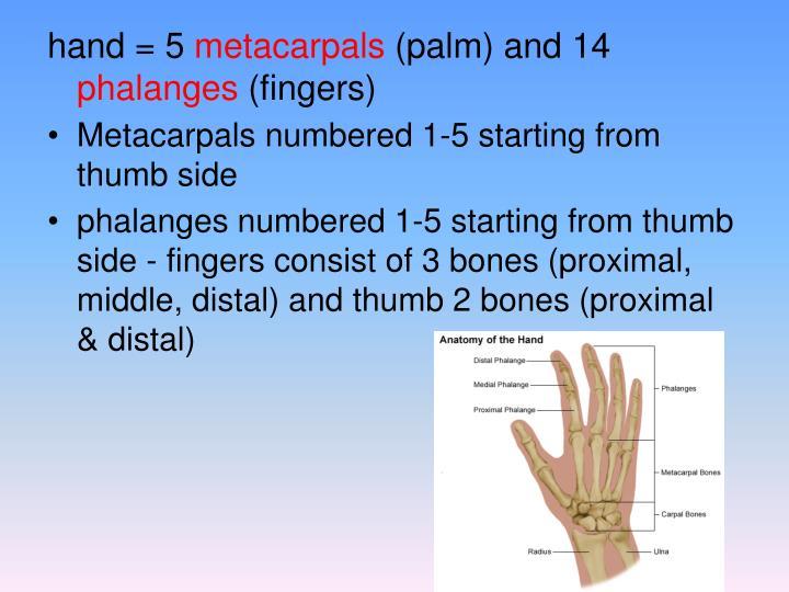 hand = 5