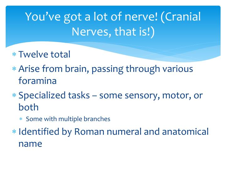 You've got a lot of nerve! (Cranial Nerves, that is!)