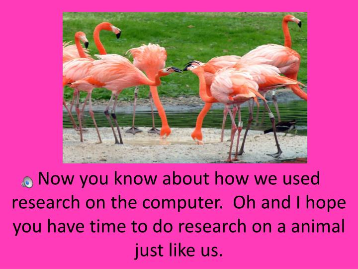 Now you know about how we used research on the computer.  Oh and I hope you have time to do research on a animal just like us.