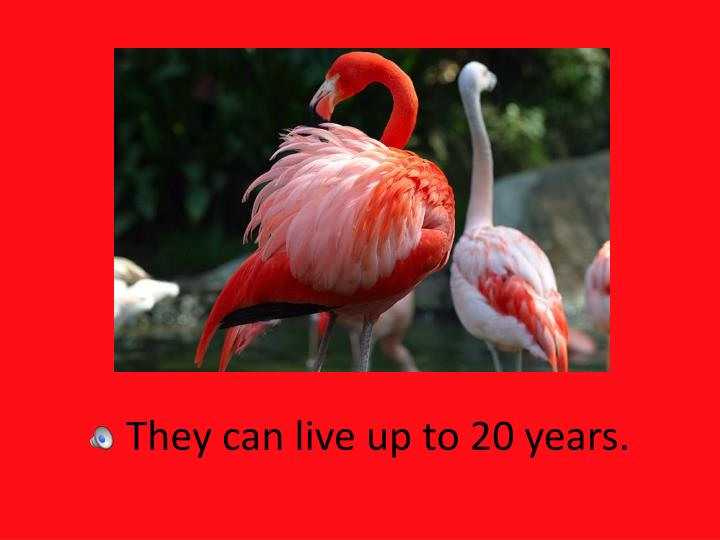 They can live up to 20 years.
