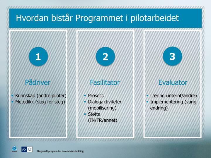 Hvordan bistår Programmet i pilotarbeidet