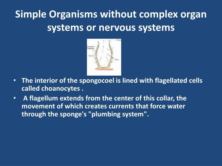 Simple Organisms without complex organ systems or nervous systems