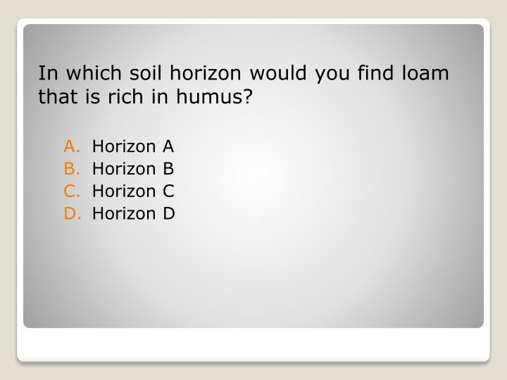 In which soil horizon would you find loam that is rich in