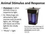 animal stimulus and response3