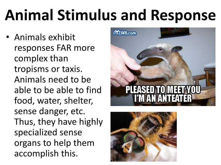 Animal Stimulus and Response