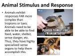 animal stimulus and response4