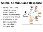 animal stimulus and response5