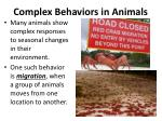 complex behaviors in animals