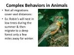 complex behaviors in animals1