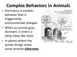 complex behaviors in animals2