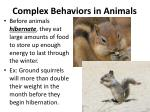 complex behaviors in animals3