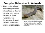 complex behaviors in animals4