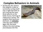 complex behaviors in animals5