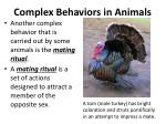 complex behaviors in animals6