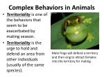complex behaviors in animals8
