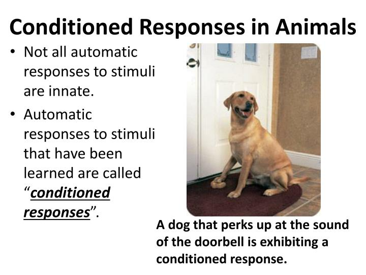 Conditioned Responses in Animals