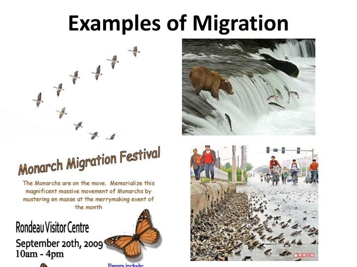 Examples of Migration