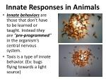 innate responses in animals