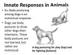 innate responses in animals3
