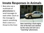 innate responses in animals5