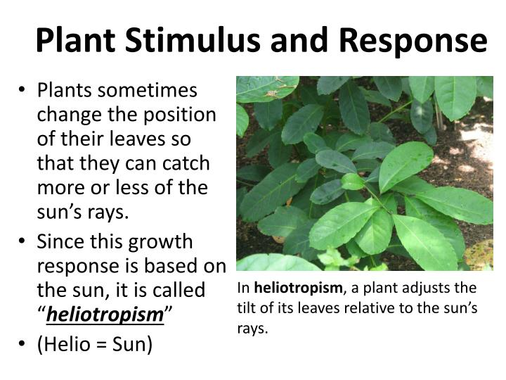 Plant Stimulus and Response