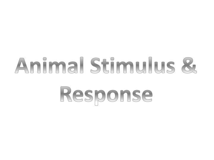 Animal Stimulus & Response