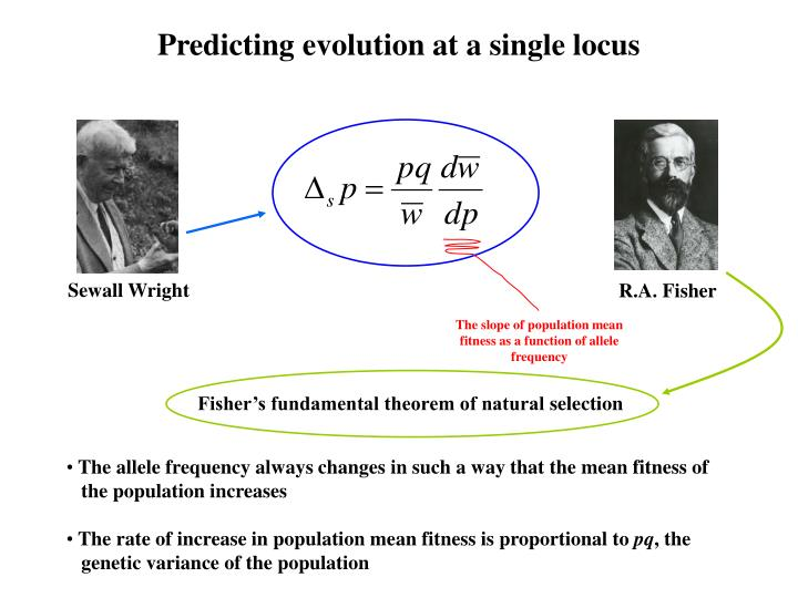 Predicting evolution at a single locus