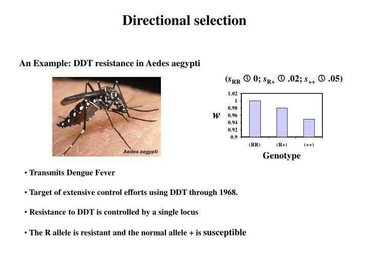 An Example: DDT resistance in Aedes aegypti