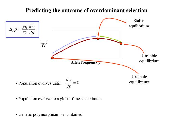 Predicting the outcome of overdominant selection