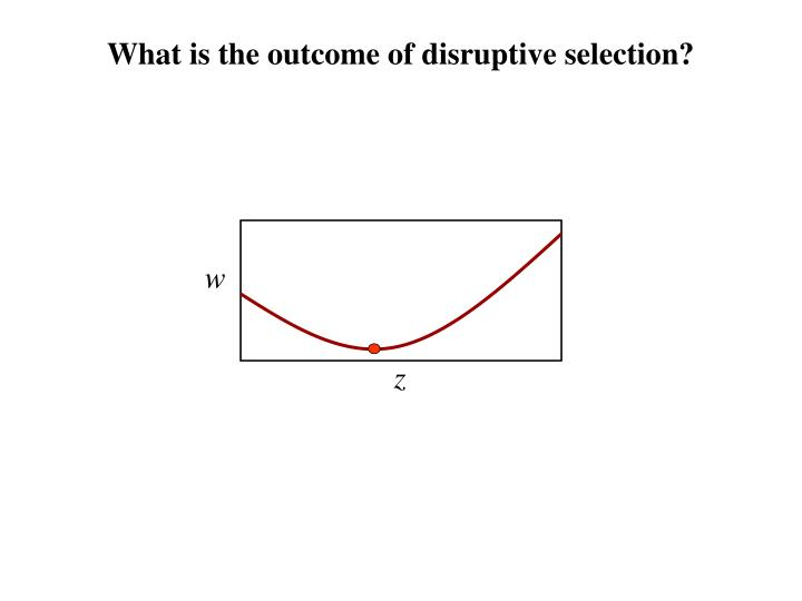 What is the outcome of disruptive selection?
